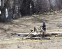 Linda Wells makes here way through the tree obstacles. by Devon Balet