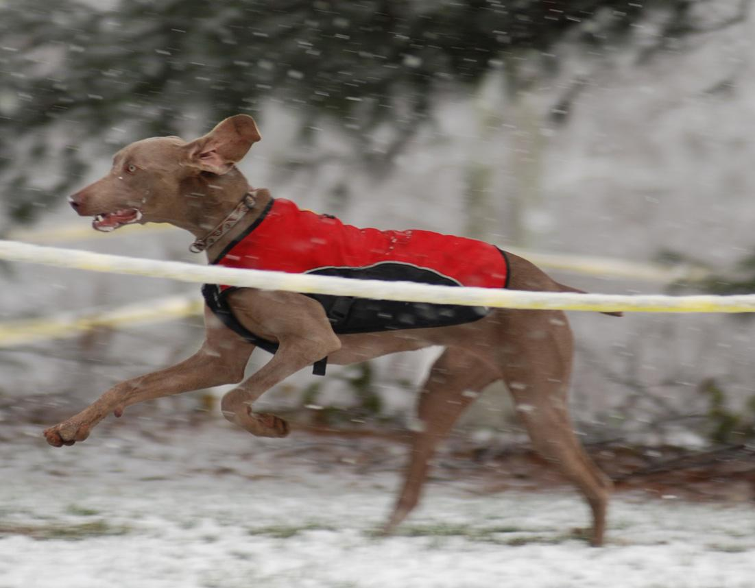MSG 5 saw even the canines braving the rough conditions. ? Bart Nave