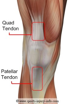 Quad tendon - apparently important for pedaling