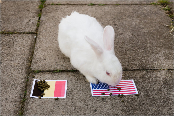The psychic rabbit predicted an American win. © Mikeyphillips on flickr