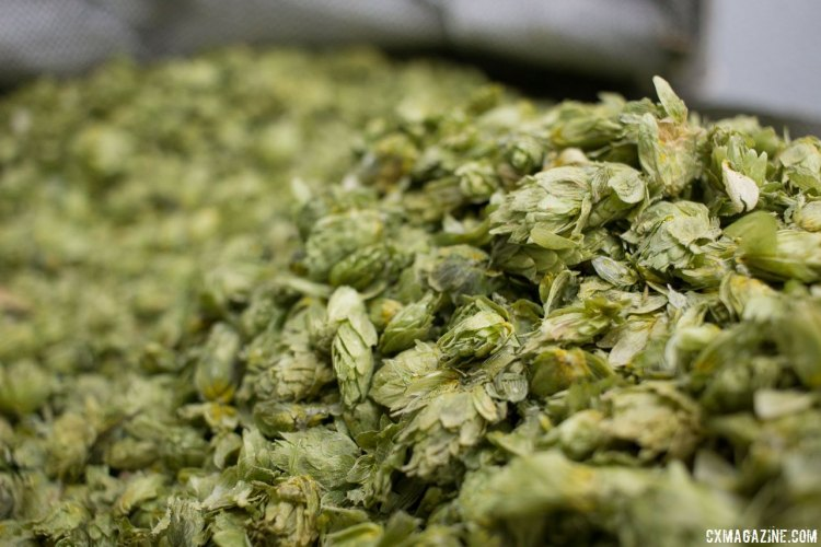 Full cone hops in every brew at Sierra Nevada - some grown on site. © Cyclocross Magazine