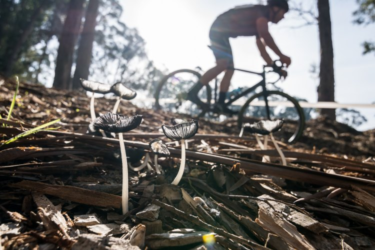 Wood chips and wild mushrooms in the sun - 2016 CycleCross at Coyote Point. © Jeff Vander Stucken / Cyclocross Magazine