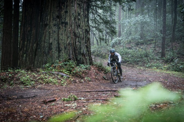 Amanda Nauman looking small but riding big among the Redwood giants. Fox AX Adventure Cross Fork test ride. photo: Connor Macleod