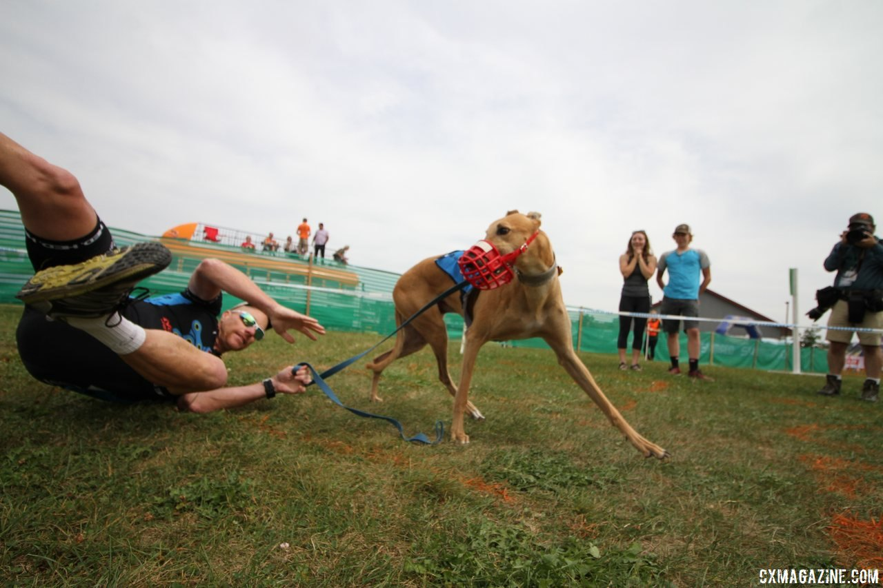 The Doggie Cross will be back at Jingle Cross this year. 2017 Jingle Cross World Cup © D. Mable / Cyclocross Magazine