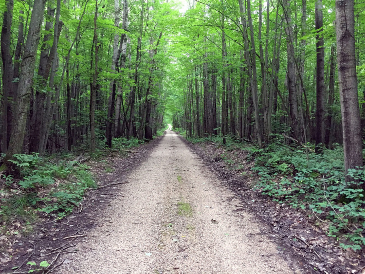 Seasonal road in Manistee National Forest. Photo courtesy of Coast to Coast Gravel Grinder