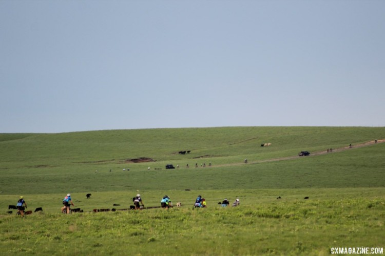 Riders, cows and cars wind their way through the Flint Hills. 2018 Dirty Kanza 200. © Z. Schuster / Cyclocross Magazine